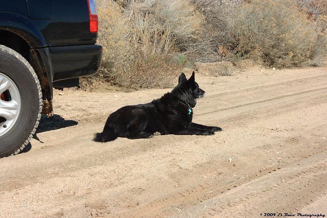 The Holloran Dog at Hill 582