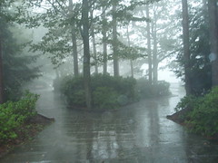 stream(0.0), river(0.0), forest(0.0), waterway(0.0), fog(1.0), rain(1.0), drizzle(1.0), watercourse(1.0), mist(1.0),