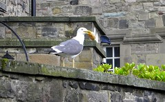 Seagull, with added doughnut