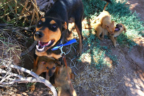 Lady Momma very happy to be rescued with all 4 pups, hiding in the shade while the puppies play, San Bruno, Baja California Sur, Mexico by Wonderlane