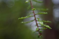 Loose Park - Rain