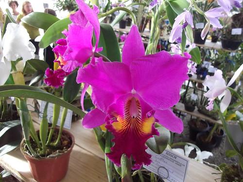 orquídea 10-04-2011 (4)