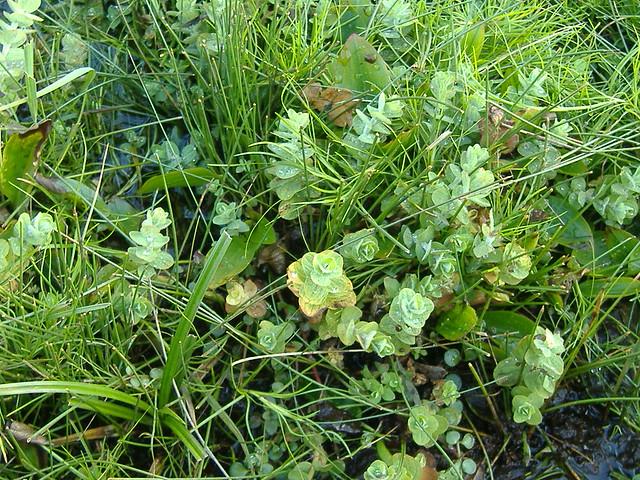 Bog Plants Flickr - Photo Sharing!