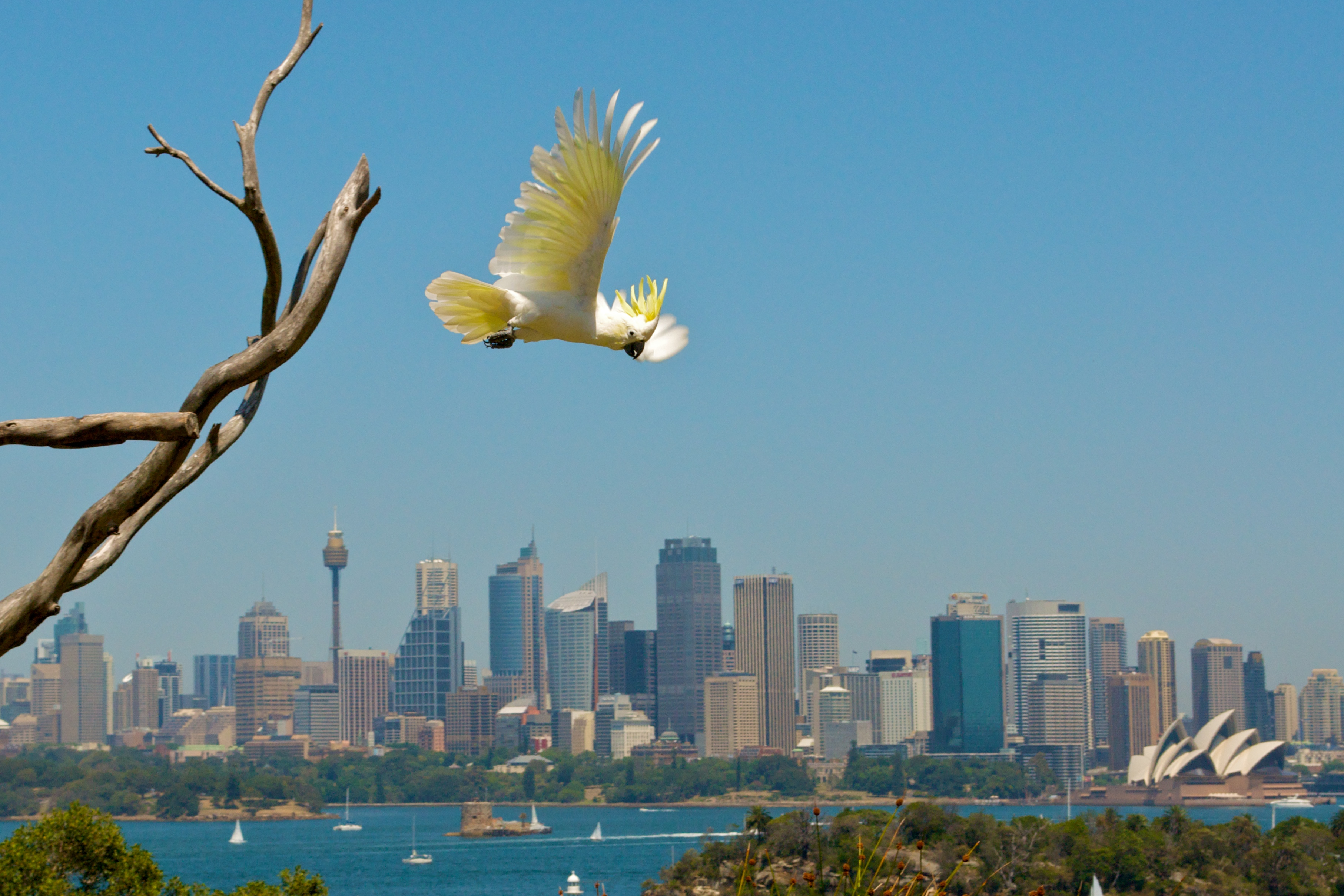Taronga Zoo- a great place for backpackers in Sydney