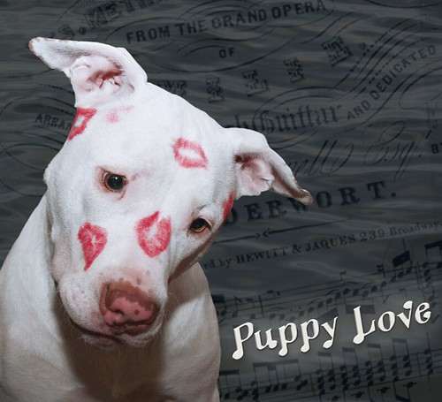 Dog Valentine S Day To A Best Friend
