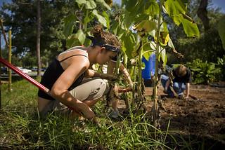 UCF Organic Community Garden