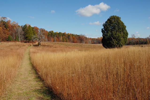 Autumn at Spotsylvania
