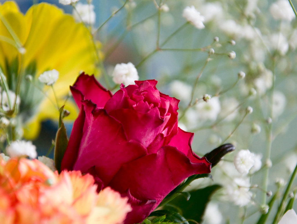 Cheapest Flowers Flowers Beautiful Flowers Screensavers
