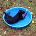 Bonzer in the kiddie pool
