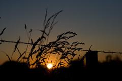 Coucher de soleil / IMG_3507