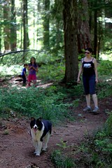 jack the border collie on the trail    MG 0078