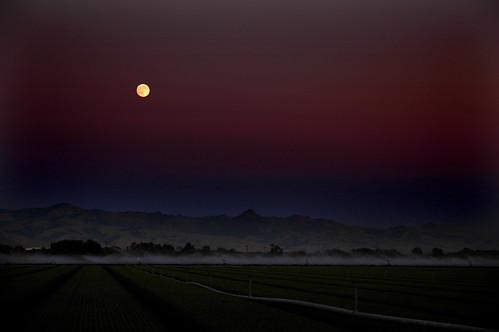 california moon rise hollister
