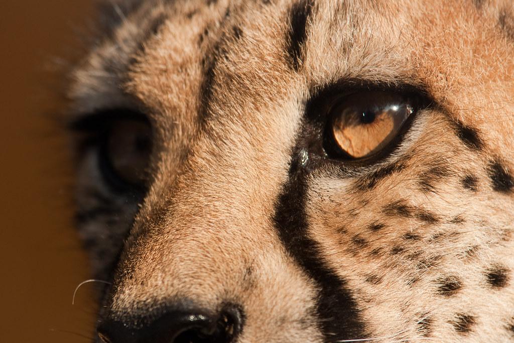 Gepard by philippruemmele.com