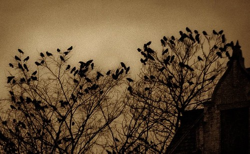 Crows-2