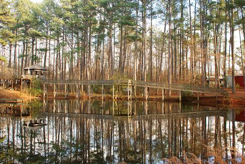 bridge trees georgia landscape natural