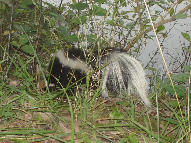 Skunk Smell Off Dogs All Natural Solution