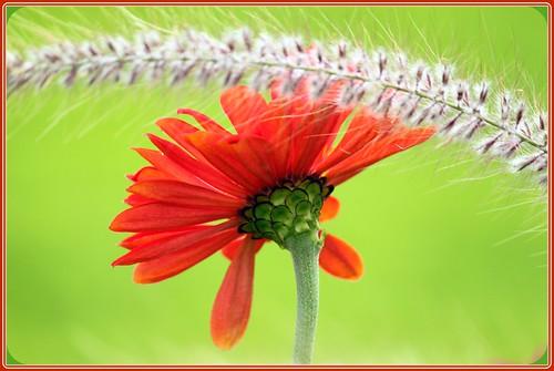 ontario canada floral londonontario