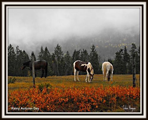 autumn horse canada scenery bc east fujifilm kootenay picnik brisco