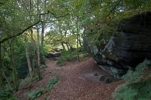 Alderley Edge woodland path