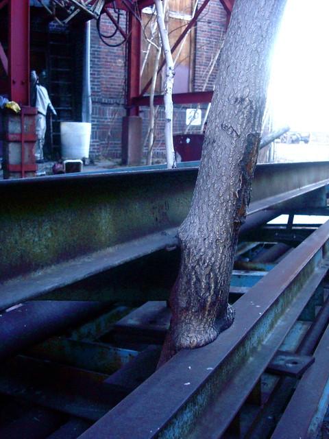 Tree > Steel.