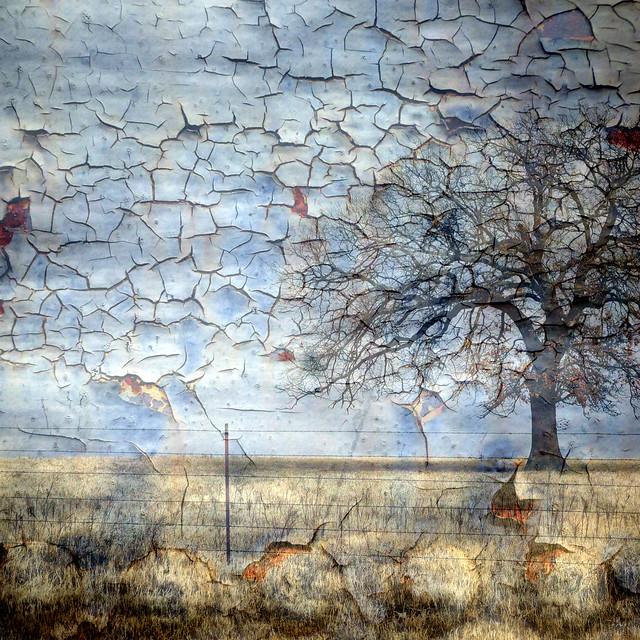 North Texas Rural Winter Landscape Oak Tree Overlay
