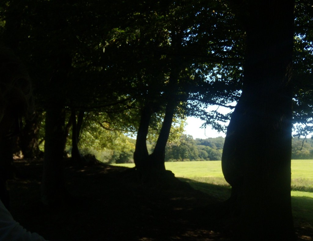 Treeline Ockley to Warnham