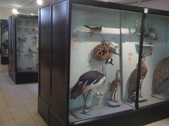Explore the Nairobi National Museum - Things to do in Nairobi