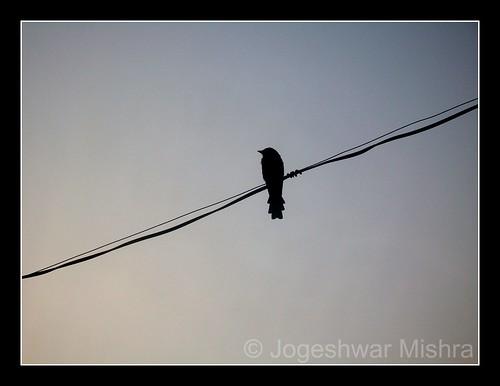 morning bird silhouette sunrise wire kodak jogeshwar