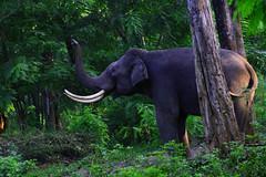 Wildlife Safari At Tholpetty Wildlife Sanctuary