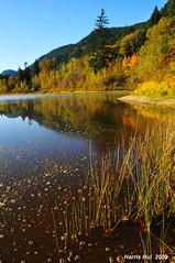 Fall Color Merritt