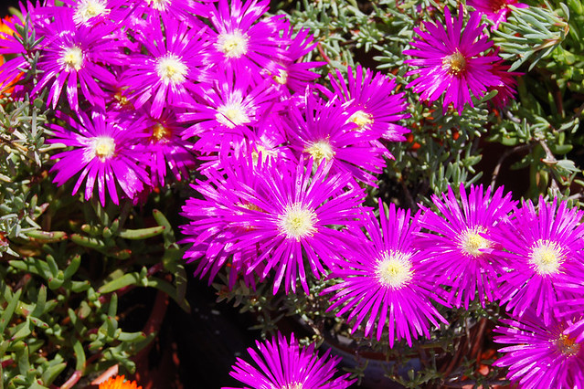 Flores de messem el centro de jardiner a en valencia tot - Jardineria en valencia ...