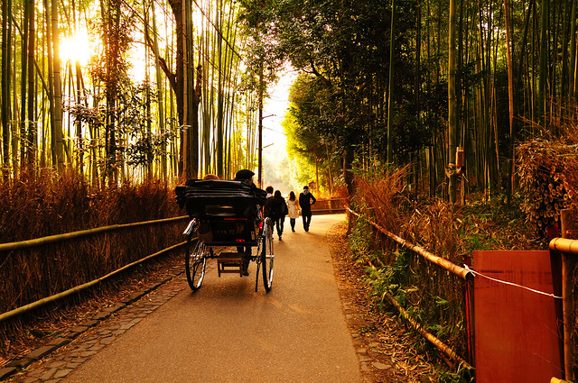 Bamboo forest 竹林の道_03