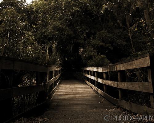 bridge trees sc southcarolina kiawah trail kiawahisland