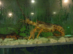 amphibian(0.0), food(0.0), animal(1.0), crustacean(1.0), crayfish(1.0), seafood(1.0), marine biology(1.0), invertebrate(1.0), fauna(1.0),