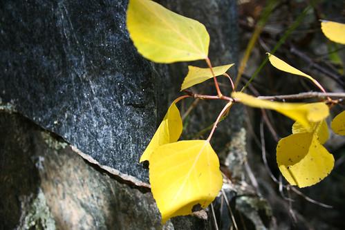 rock colorado aspen