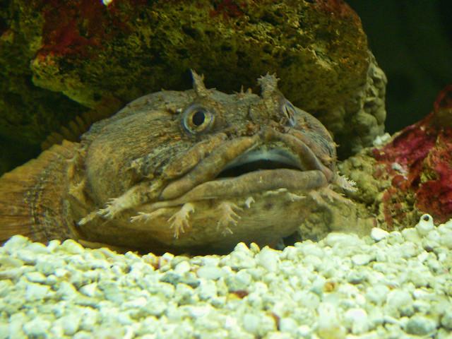Strange Looking Fish |...