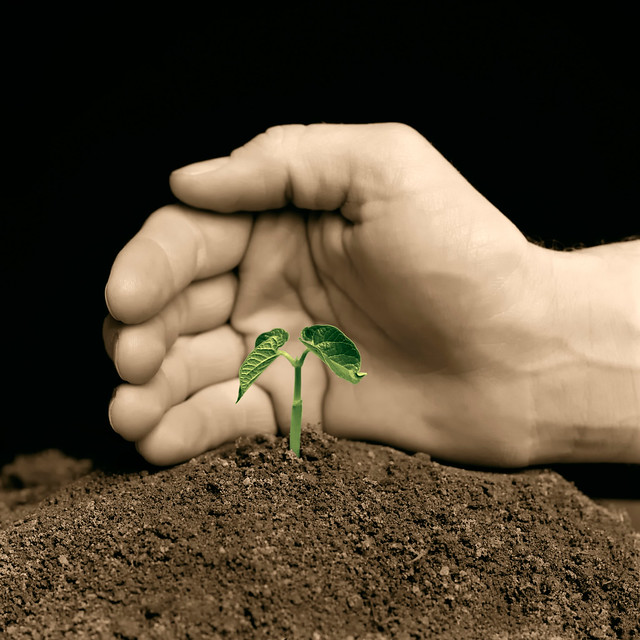 Hand Protecting a Young Plant