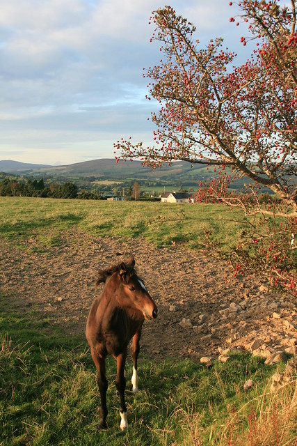 Ballinderry Autumn
