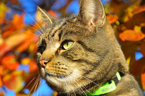 Cat in Autumn Sun (Uncropped)