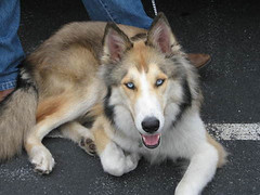 Collie Crosses + Join Group