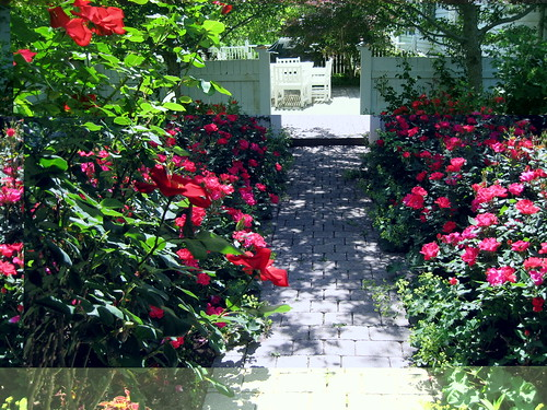 village of roses rose project village of wild rose waushara