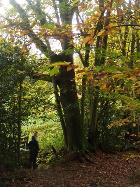 Autumn trees 9