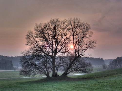 trees sunset red sun sunlight tree misty germany bayern bavaria evening oak sonnenuntergang sundown oberbayern upperbavaria bad foggy sonne atmospheric stimmungsvoll eiche abendstimmung eichen nebelig claudemunich baumgruppe clumpoftrees egling harmating clusteroftrees tölzwolfratshausen eichengruppe