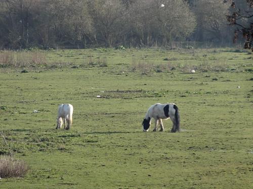 114 - Horses