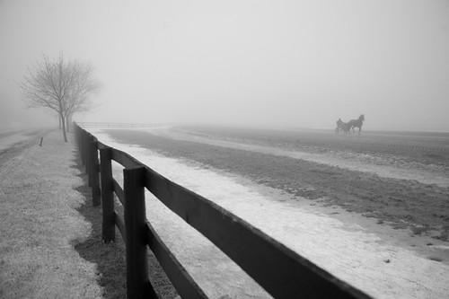 Winter Gait