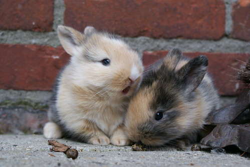 Little Bunnies