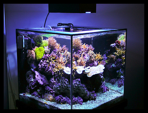 Show me your cube page 13 reef central online community for Cube saltwater fish tank