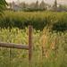 Naramata + Okanagan FOF 2009 426