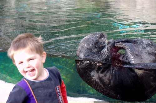 sequoia reacts to the private otter encounter    MG 5738