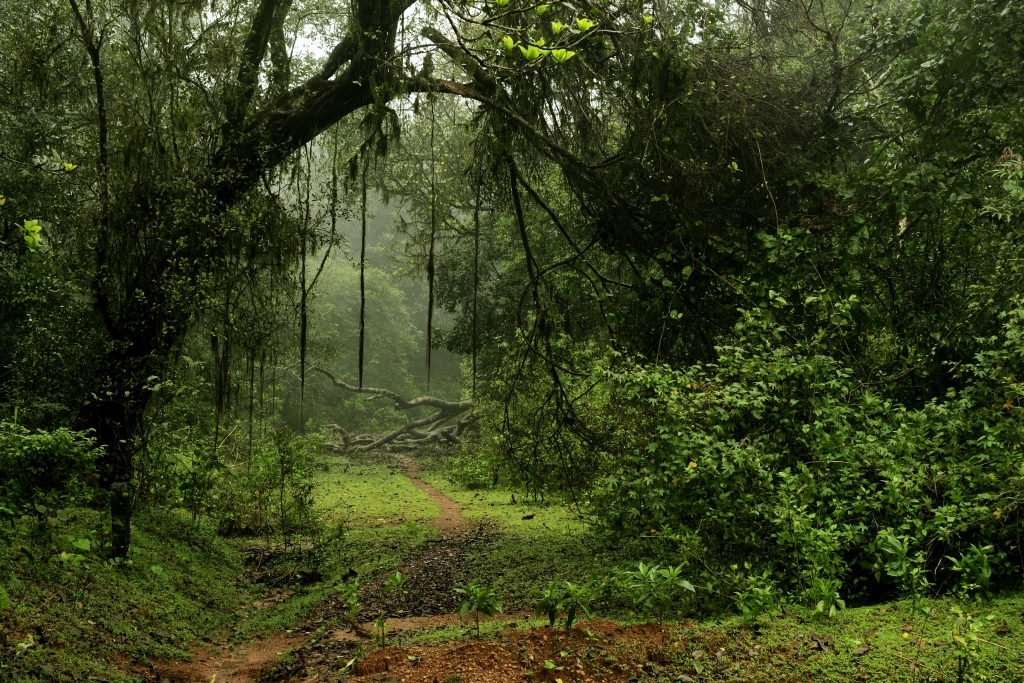 Indira Gandhi National Park